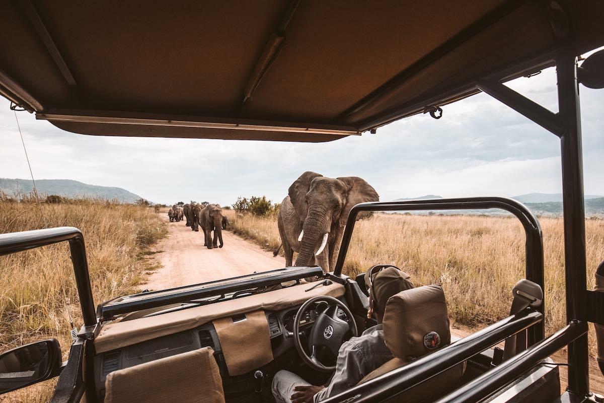 Quand s'aventurer à Kruger's Park en Afrique du Sud?